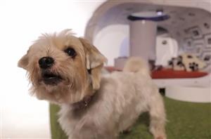 サムスンが開発した未来の犬小屋が何だかすごいw【海外の反応】