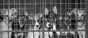 日本の動物の扱いが中国以下なんだが【海外の反応】