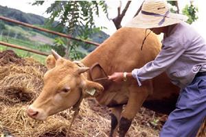 米国で販売されている韓牛のバラ肉のお味は?【海外の反応】