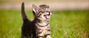 キュートな子猫のオリンピックが開催【海外の反応】