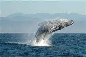 日本で鯨肉を食べてきた~けっこう美味しい~【海外の反応】