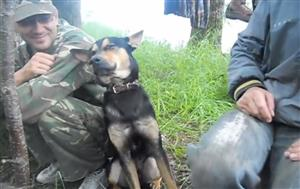 仕事中の眠気に必死で耐える犬がかわいい【海外の反応】