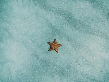 starfish-54e2d5404c_640