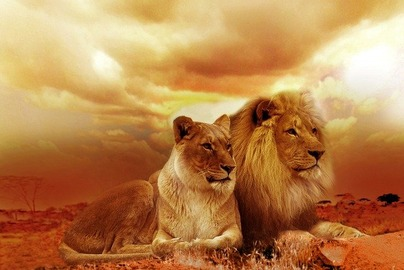lions-53e7d2424a_640