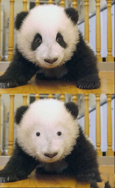 黒 なし パンダ