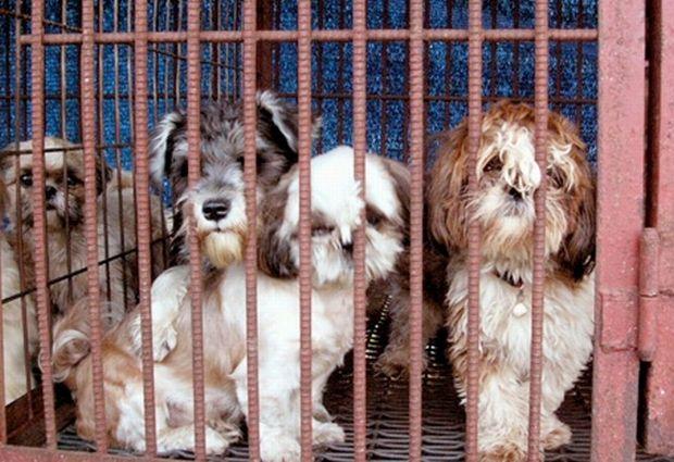 韓国人「犬肉はマジでうまい!飼い犬ですら食べ