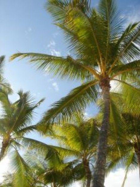 palm-tree_2811892