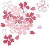 春休み(桜)