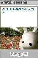 blog-usagi-2004-aug2