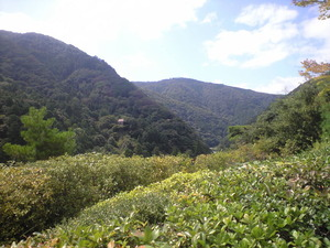 2010年9月16日大河内山荘裏山