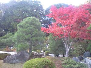 2010年11月15日光明寺お庭