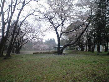2010年4月5日美しが丘公園
