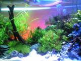 2009年7月23日六本木アクアリウム水槽1