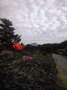 2010年11月17日バラ園よりのぞむ比叡山