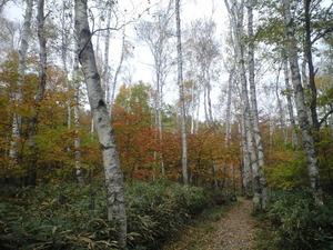 2010年10月17日自然園白樺