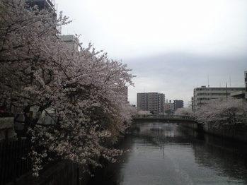 2010年4月7日大田川桜