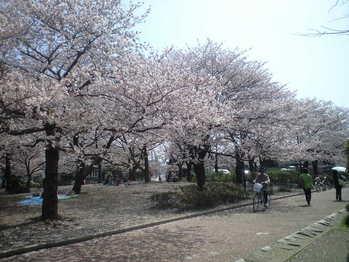 2010年4月6日大師公園桜