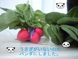 2009年3月21日撮影の野菜を2009年6月15日に加工