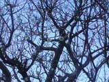 2008年大晦日の梅