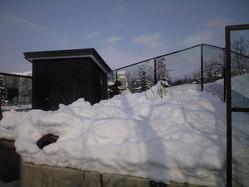 2010年2月8日北極狐