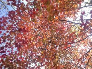 2010年10月17日自然園紅葉