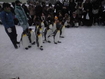 2010年2月8日ペンギン散歩