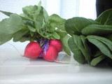 2009年3月21日近所直売場の野菜