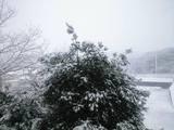 2008FEB3大雪