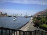 2009年4月3日隅田川桜1