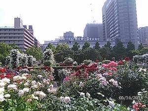 ホテルニューグランドとバラ