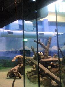 2009年12月19日動物園パンダ