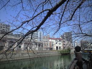 2011年4月1日大岡川つぼみ桜