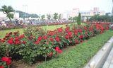 2008MAY23ヴェルニー公園の赤いバラ