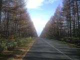2008年11月3日野辺山高原ロッジの落葉松並木