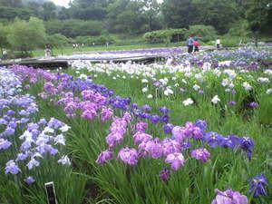 2010年6月15日横須賀菖蒲園3