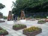 2009年6月25日江ノ島ガーデンの花壇
