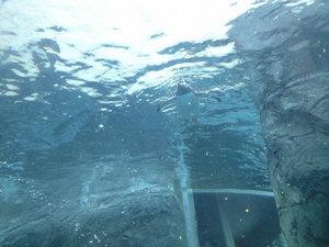 2010年2月8日ペンギン遊泳