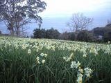 2009年2月24日釜山水仙