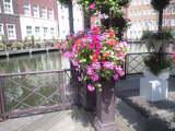 2008JUNE4ホテルヨーロッパの花カゴ