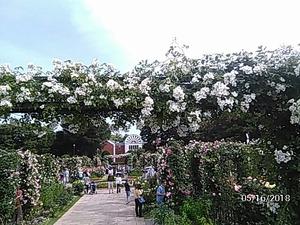 2018-5-16大佛次郎記念館前