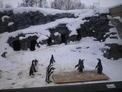 2010年2月8日ペンギン