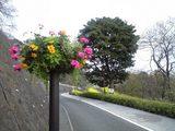2008MARCH28花かご
