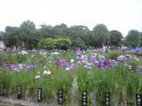 2009年6月4日堀切菖蒲園