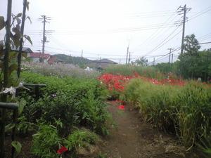 2011年05月16日花畑