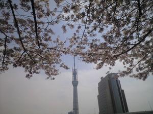 2011年4月11日スカイツリーと桜