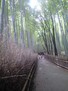 2010年9月16日嵯峨竹の道