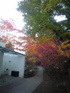 2010年11月6日小山敬三美術館ピンクの葉