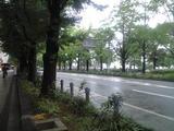 2008年9月30日山下公園通り、銀杏くさいぞ