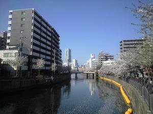 2011年4月13日大岡川桜1