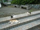 2009年6月25日江ノ島の地域ネコ